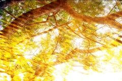 Abstracte schaduw op water royalty-vrije stock fotografie
