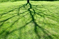 Abstracte schaduw van boom. Royalty-vrije Stock Afbeelding