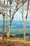 Abstracte schoftenboom Stock Afbeelding
