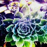 Abstracte Succulente Illustratie Royalty-vrije Stock Foto