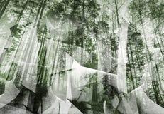 Abstracte surreal bosachtergrond Groene gestemde collage vector illustratie