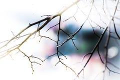 Abstracte takken in de lentebehang Stock Foto