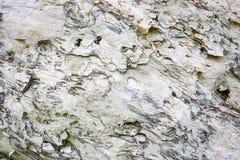 Abstracte textuur als achtergrond van paperbarkgumtree stock fotografie