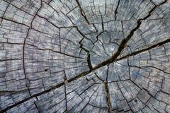 Abstracte textuur van een gebarsten boom, textuur heartwood backgroun Stock Fotografie
