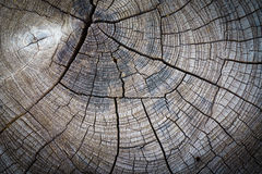 Abstracte textuur van een gebarsten boom, textuur heartwood backgroun Royalty-vrije Stock Fotografie