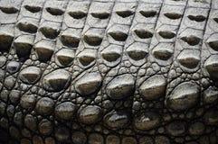 Abstracte textuur van krokodilhuid stock afbeelding