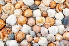Abstracte textuur van shells Royalty-vrije Stock Afbeelding