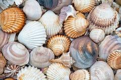 Abstracte textuur van shells Stock Foto's