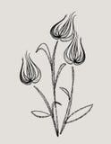 Abstracte tulp Royalty-vrije Stock Foto's