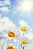 Abstracte uitstekende bloemen de zomerachtergrond Stock Foto's