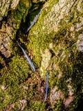 Abstracte veren op een bemoste boomboomstam Royalty-vrije Stock Fotografie