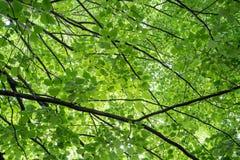 Abstracte verse groene aardachtergrond van verse groene bladeren en donkere stammen Royalty-vrije Stock Foto's