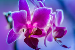 Abstracte violette orchidee Stock Foto's