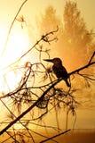 Abstracte Vogel Backround Royalty-vrije Stock Foto's