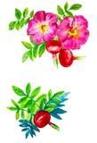 Abstracte waterverfillustratie van rozebottelbloemen en bessen met bladeren Geïsoleerdj op witte achtergrond vector illustratie