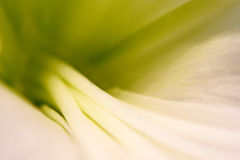 Abstracte wit-groene achtergrond Royalty-vrije Stock Foto