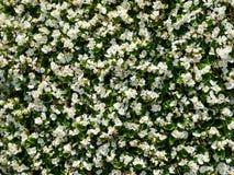 Abstracte witte bloemachtergronden Stock Afbeelding