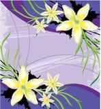 Abstracte witte bloemen op purpere achtergrond Royalty-vrije Stock Fotografie