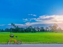 Abstracte zachte vage en zachte nadruk het silhouet van padiepadieveld met de fiets, de zonsondergang, de mooie hemel en de wolk Stock Fotografie