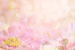Abstracte zachte zoete roze bloemachtergrond van kosmosbloemen stock fotografie