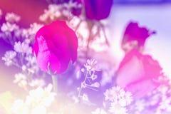 Abstracte zoete fantasiebloem met kleurrijke filters stock afbeeldingen