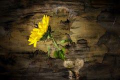 Abstracte zonnebloem Stock Foto