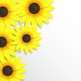Abstracte zonnebloemenachtergrond Stock Fotografie