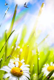 Abstracte zonnige mooie de Lenteachtergrond Royalty-vrije Stock Afbeeldingen