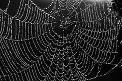 Abstracte zwart-witte achtergrond van een Web Stock Afbeelding