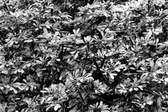 Abstracte zwart-witte bladeren stock fotografie