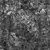 Abstracte zwart-witte psychedelische achtergrond stock illustratie