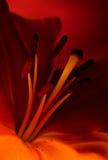 Abstractie 7 van de bloem. Royalty-vrije Stock Foto's