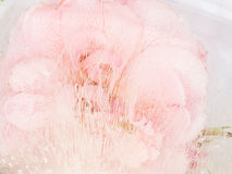 Abstractie met roze bloem Stock Afbeelding