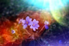 Abstractie van de lentebloemen Mooie achtergrond voor ontwerp royalty-vrije stock afbeelding