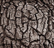 Abstraction. Structure of a bark of an old oak Royalty Free Stock Photo