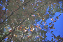 Abstraction: autumn foliage colors reflection in water. Foliage, autumn, colors, water, reflection, ripple, abstraction, impressionism, sun, effect, blue, sky Stock Image