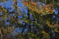 Abstraction: autumn foliage colors reflection in water. Foliage, autumn, colors, water, reflection, ripple, abstraction, impressionism, sun, effect, blue, sky Royalty Free Stock Image
