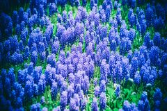 Abstraction background many flowering purple bells Royalty Free Stock Photo