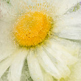 Abstraction with cute daisy flower Stock Images