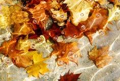 Abstraction d'automne Photographie stock libre de droits