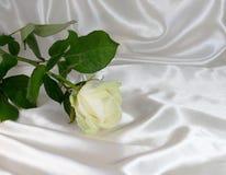Abstraction d'un fond blanc de rose Images libres de droits