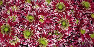 Abstraction de fleur Images libres de droits