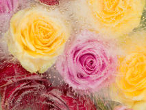 Abstraction with different roses Royalty Free Stock Image