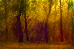 Abstraction of forests with strange colors. The forest with lots of trees taken at dawn  near the river Danube Stock Photos