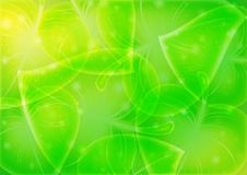 Abstraction-leaf-background  10 eps Stock Photos