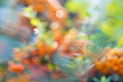 Abstraction with orange and green colors. Colorful orange and green flower abstraction Stock Photo