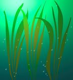Underwater world. Underwater plants in water with bubbles, design for the aquarium. Underwater seaweed, lit up by the Sun on the sea bottom and air bubbles Stock Image
