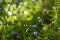 Abstraia o fundo borrado com as flores azuis bonitas pequenas e as plantas verdes com bokeh bonito na luz solar imagem de stock