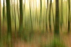 Abstraia o fundo borrado silvicultura Fotografia de Stock