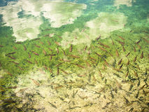 Abstraia o fundo desobstruído do lago da água Fotos de Stock Royalty Free